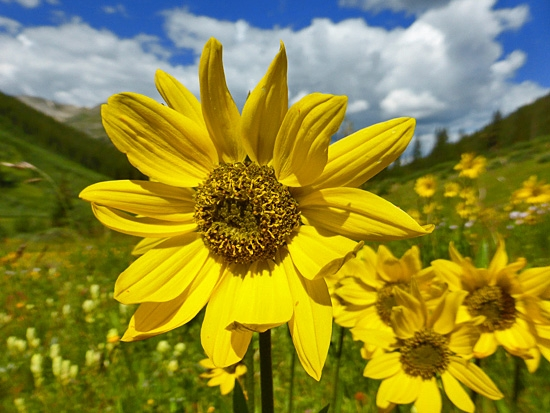 Protrails grizzly lake photo gallery aspen snowmass