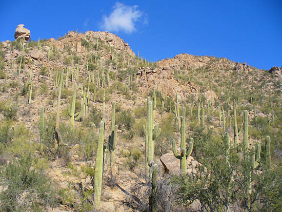 Saguaro%20-%20wasson%20-%20gould%20side%