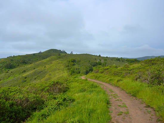 The Dias Ridge Trail runs through open coastal hills to Muir Beach