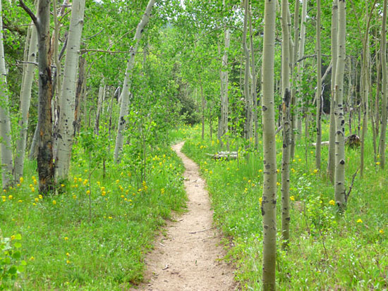 Aspen-lined trails lead through Frazer Meadows en route to Panorama Point