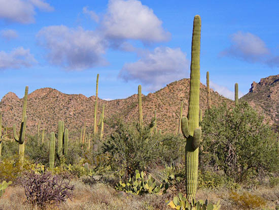ProTrails Desert Discovery Trail Saguaro West Tucson
