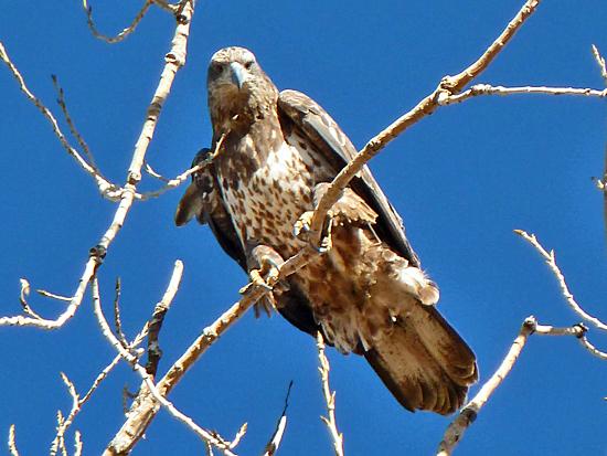 Protrails Barr Lake State Park Photo Gallery Boulder