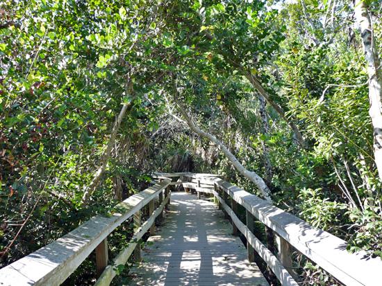 Protrails Mahogany Hammock Trail Photo Gallery